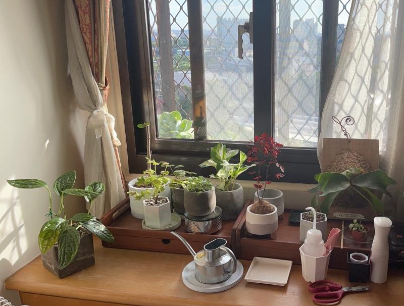 觀葉植物三種小品特性、入門照顧心得。第二彈分享 @林飛比。玩美誌