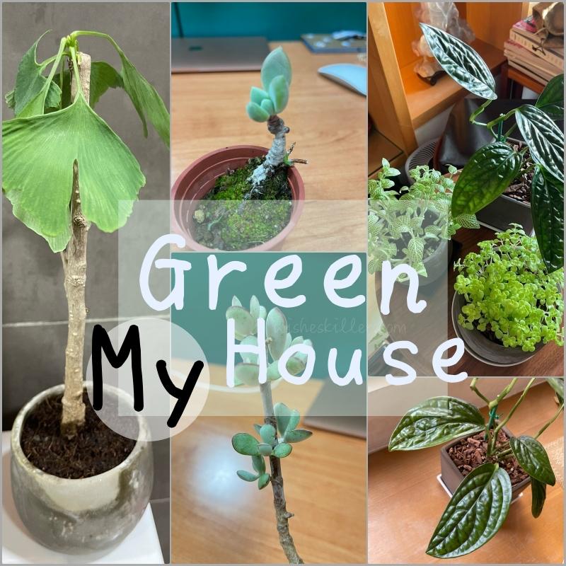 觀葉植物分享 | 網紋草/鐵線蕨,個性決定了你的綠化盆栽! @林飛比。玩美誌