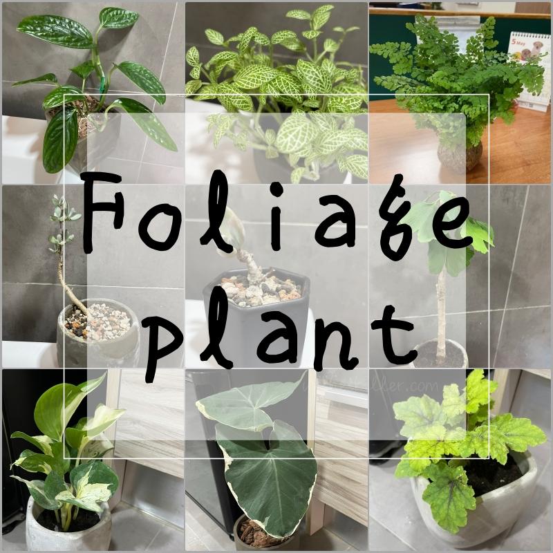 9種觀葉植物特性、不專業入門照顧心得分享 @林飛比。玩美誌